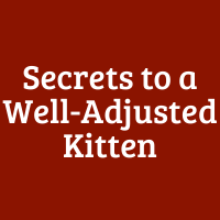 5 Secrets to a Well-Adjusted Kitten