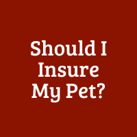 Should I Insure My Pet?