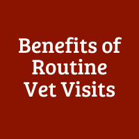 Benefits of Routine Vet Visits