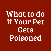 What to do if Your Pet Gets Poisoned