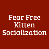 Fear-Free Kitten Socialization