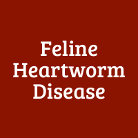 Feline Heartworm Disease