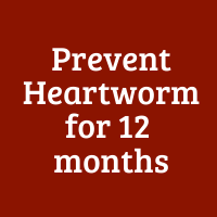 Prevent Heartworm for 12 months