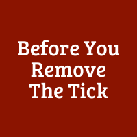Before Your Remove the Tick