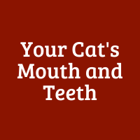 Your Cat's Mouth and Teeth