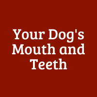 Your Dog's Mouth and Teeth