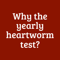 Why the Yearly Heartworm Test